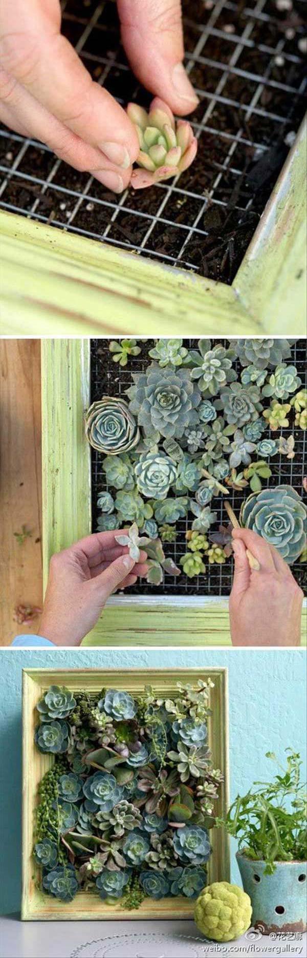 Awesome indoor mini garden ideas for Indoor mini garden ideas