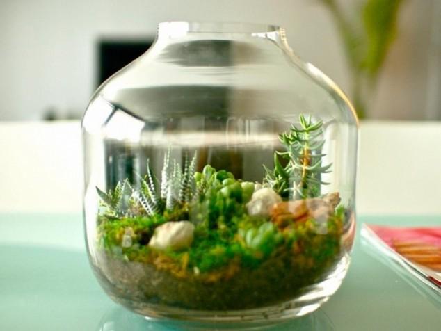 miniature terrarium plants