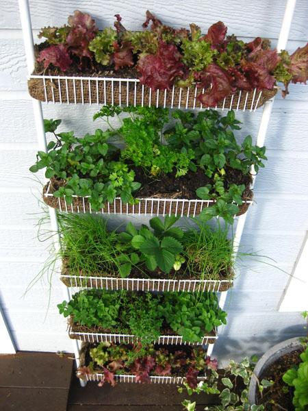 my spice rack garden2