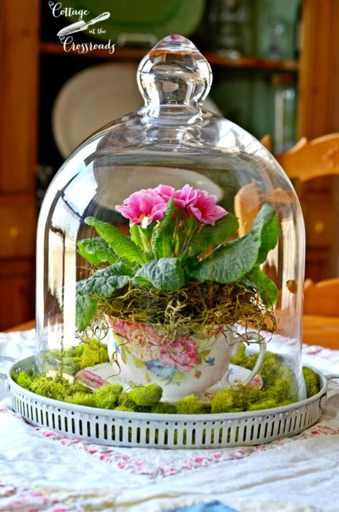 teacup garden ideas 14