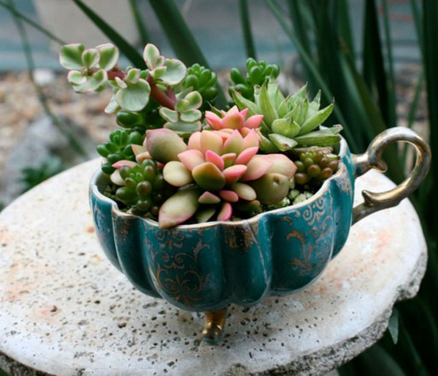 teacup garden ideas 8