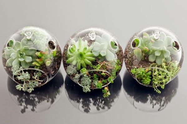 15+ Cool and Creative Terrarium Ideas