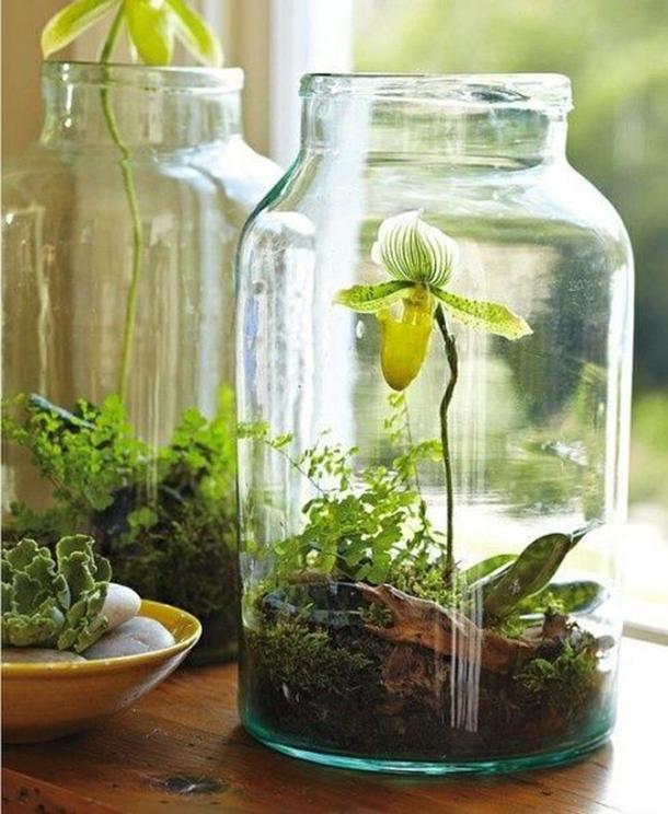 terrarium ideas 12