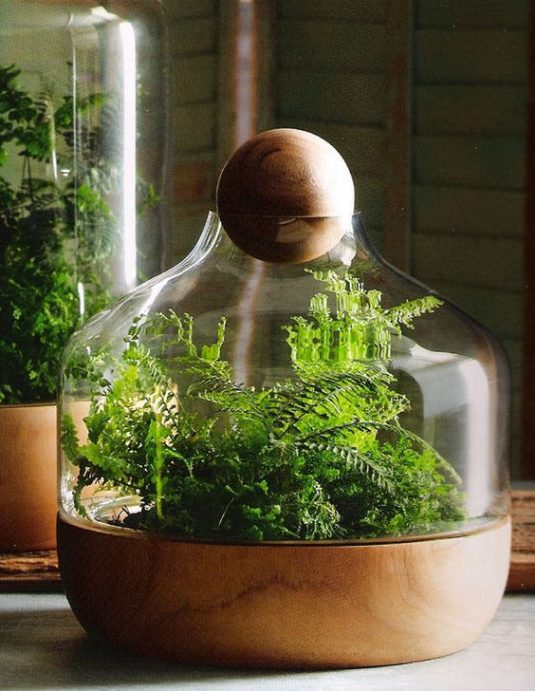 wonderful terrarium 11