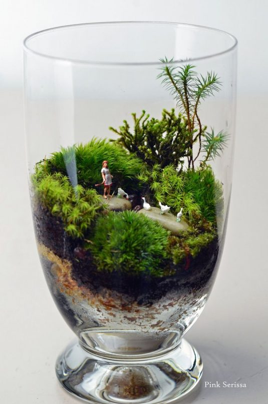 wonderful terrarium 6